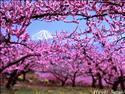Fond d'écran Cadre de fleurs à télécharger gratuitement