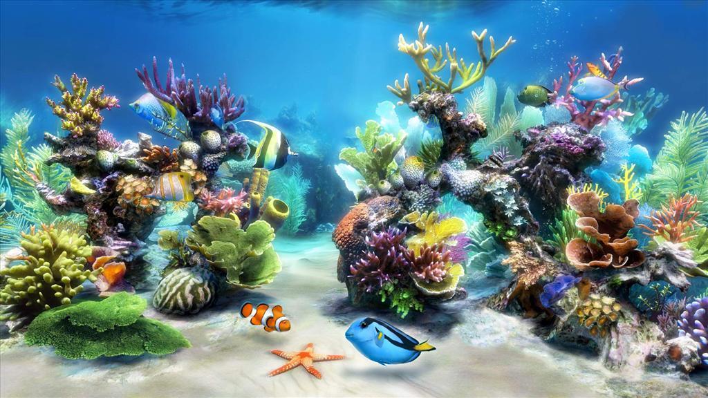 fond d'ecran gratuit aquarium