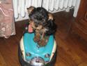 Fond d'écran Bébé chien à télécharger gratuitement