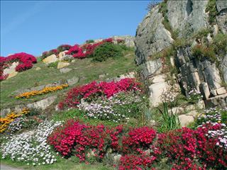 Fond d'écran Jardin en Bretagne