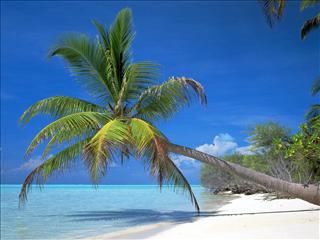 Fond d'écran Palmier sur la plage