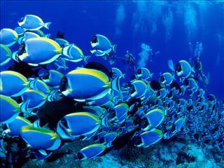 Surpêche : poissons à rechercher, poissons à éviter
