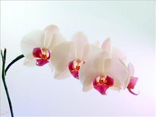 Fond d 39 cran orchid e for Fond de page word gratuit