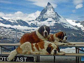 """Résultat de recherche d'images pour """"photo montagne gratuit"""""""