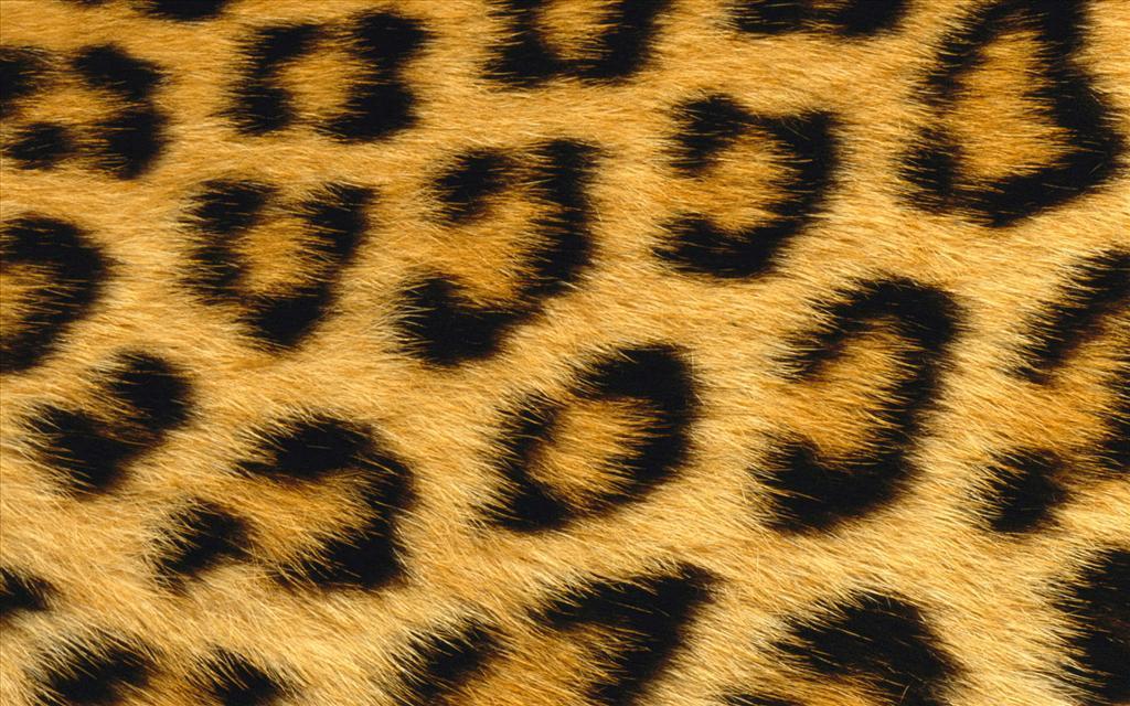 Fille de guépard fond d'écran
