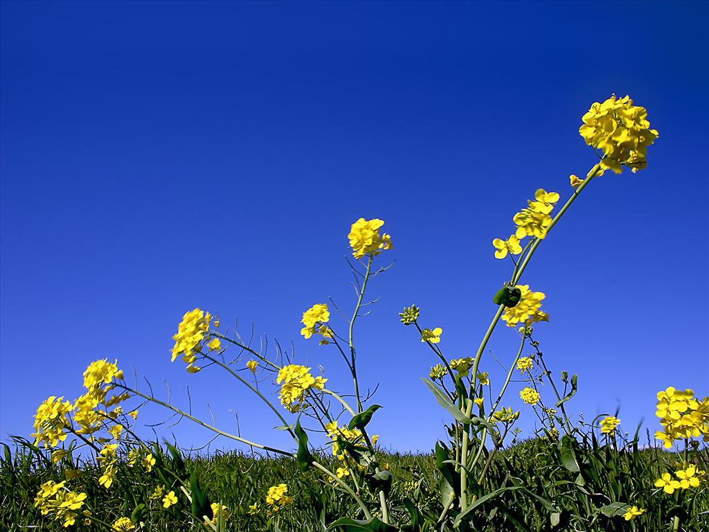 Fond D 233 Cran Fleurs Et Ciel Bleu