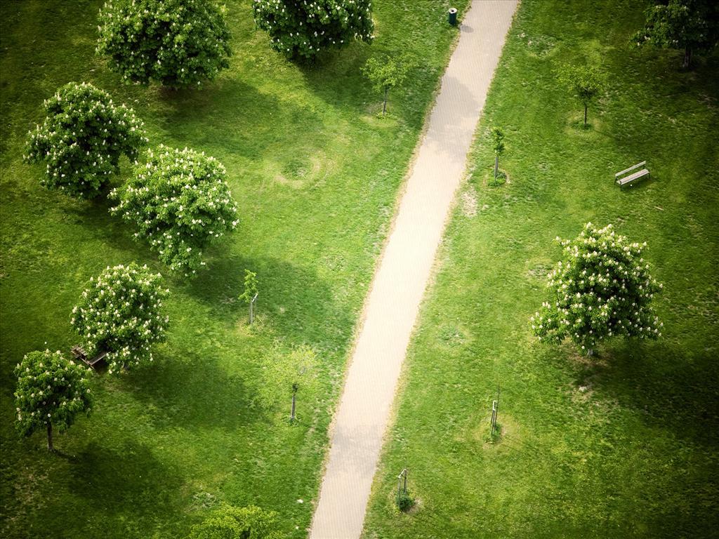 Fond d 39 cran parc vu de haut for Table vue de haut