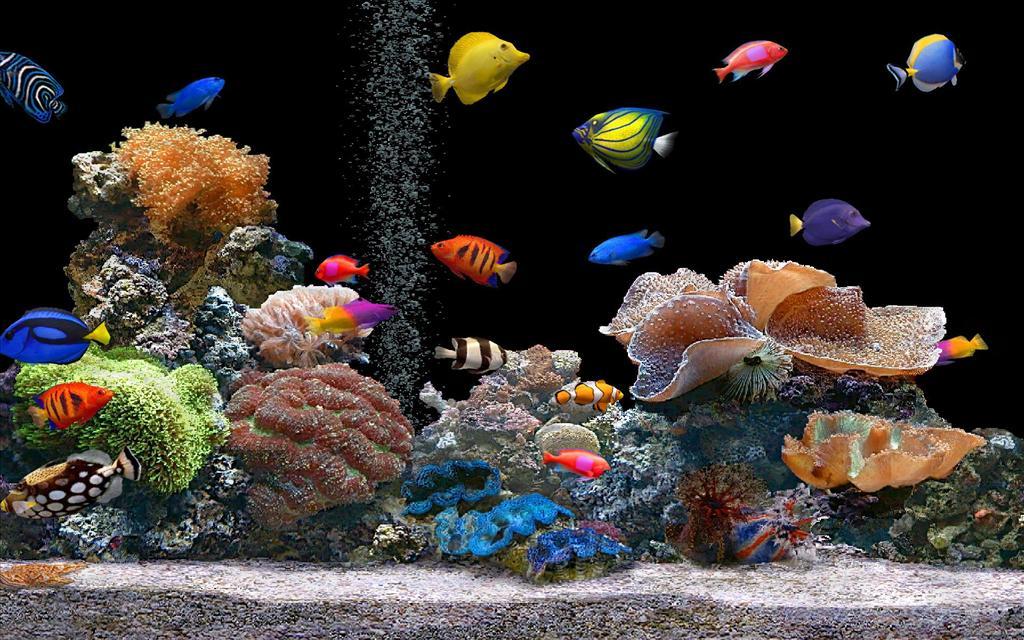 Fond d 39 cran aquarium for Fond ecran qui bouge gratuit