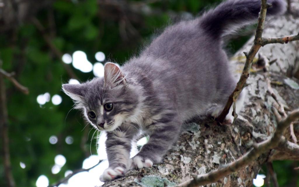 Telecharger tom le chat gratuit sur pc
