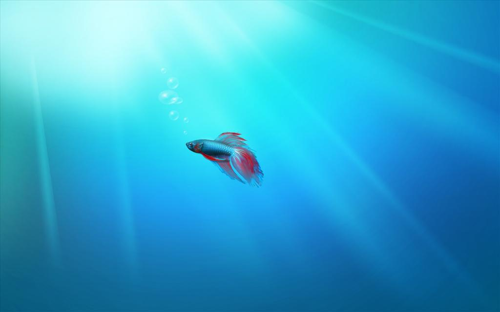 Fond D 39 Cran Windows 7 Fish