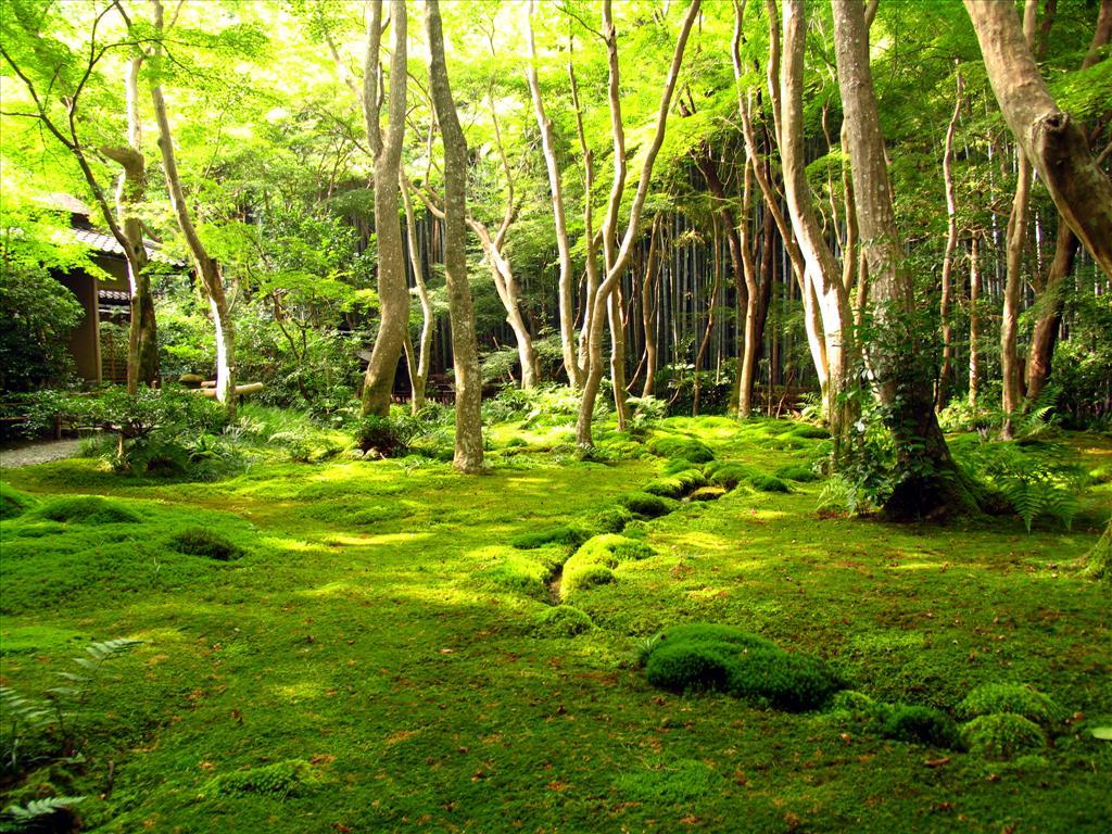 fond d 39 cran jardin de kyoto