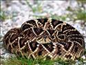 Fond d'�cran Serpent � t�l�charger gratuitement