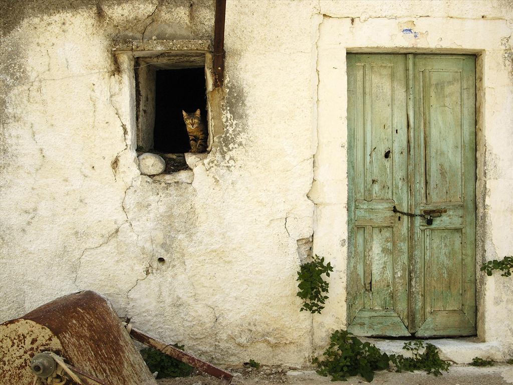Fond d 39 cran chat la fen tre for A la fenetre sarthoise