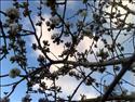 Fond d'écran Arbre en fleurs à télécharger gratuitement