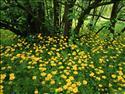 Fond d'�cran Fleurs aux pieds d'un arbre � t�l�charger gratuitement