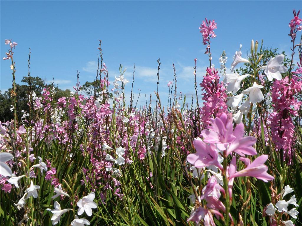Fond d 39 cran fleurs des champs - Catalogue de fleurs gratuit ...