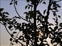 Fond d'écran Lever de soleil à travers l'arbre à télécharger gratuitement