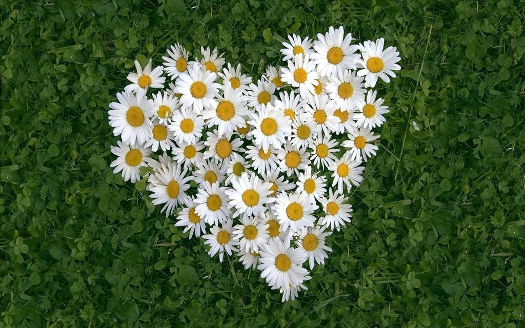 Fond d 39 cran coeur de fleurs - Catalogue de fleurs gratuit ...
