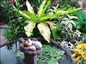 Fond d'écran Jardin zen à télécharger gratuitement