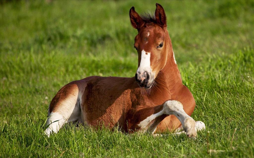 fond d'ecran gratuit de chevaux