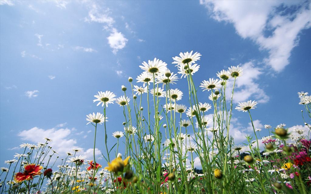 Télécharger gratuitement ce fond décran , fleur , ciel