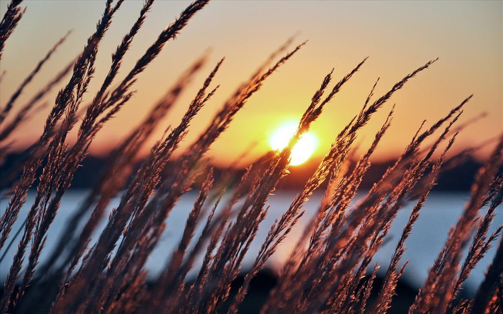 Fond d 39 cran coucher de soleil d 39 t for Fond ecran gratuit ete