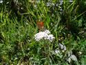 Fond d'écran Papillon sur une fleur à télécharger gratuitement
