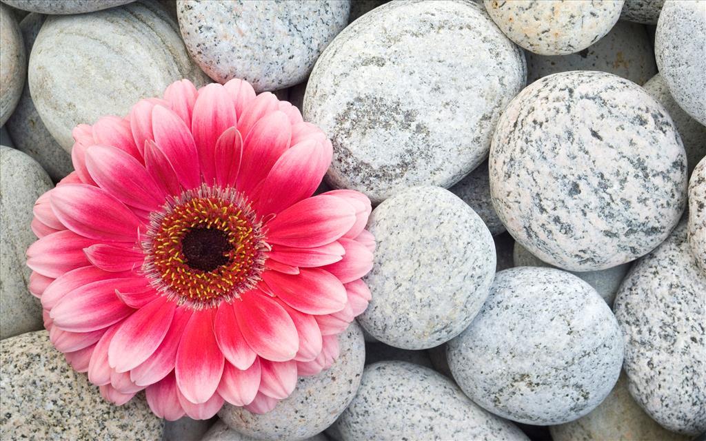 Fond Ecran Gratuit Fleurs