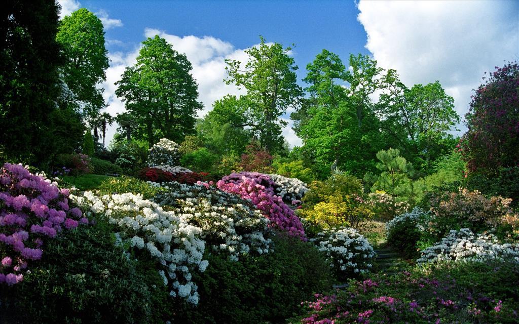 Fond d 39 cran massifs de fleurs - Fond d ecran jardin anglais ...