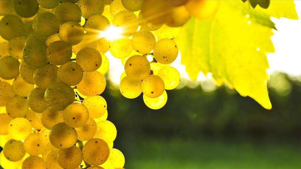 fond d'ecran gratuit raisin